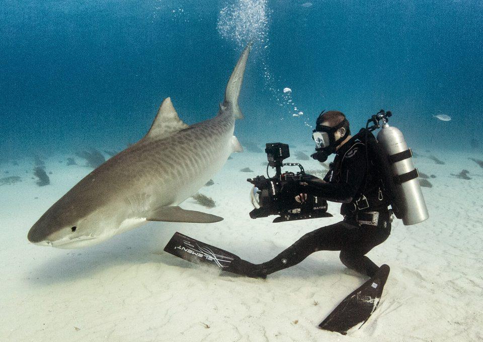 Andy-Casagrande-shark-week-sharks-conservation-cinematographer