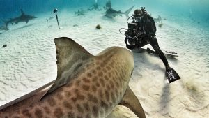 Andy-Casagrande-shark-week-sharks-conservation