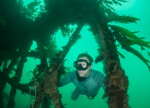 andy-torbet-kelp-forest-free-diver