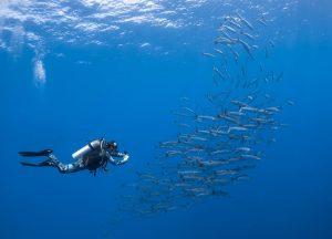 Palau-James-glancy-Barracuda