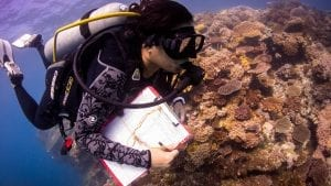 coral-reef-survey-emily-darling-wcs