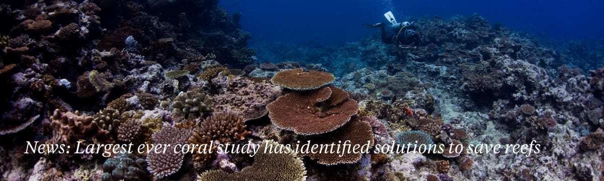 coral-study-identified-solutions-save-reefs