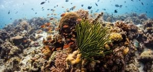 Coral-study-reef-fish-emily-darling-marine-biologist