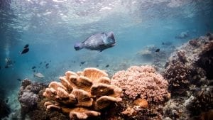 Coral-study-reef-fish-emily-darling