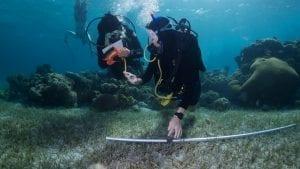Coral-study-underwater-science-reef-fish-emily-darling