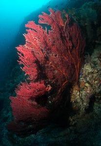 emily-darling-coral-fan-bleaching-study