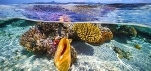 emily-darling-coral-study-cool-spots-corals