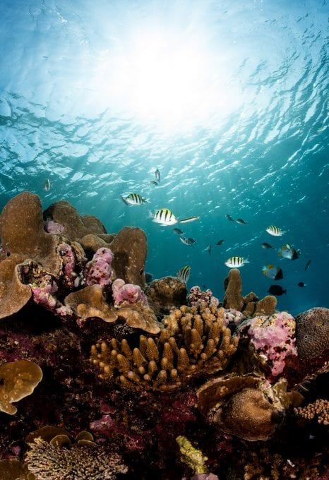 Coral-study-schooling-fish-emily-darling