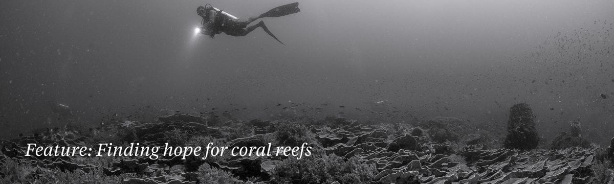 coral-study-global-heating-warming-oceans-corals-bleaching