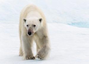 Florian Ledoux drone filmmaker ocean cinematographer oceans film festival polar bear ice arctic landscape