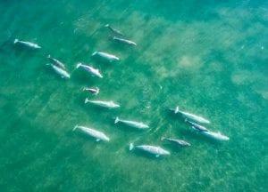 Florian Ledoux drone filmmaker ocean cinematographer oceans film festival seascape arctic landscape