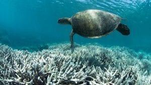 Unesco Great Barrier Reef turtle