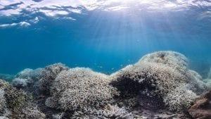 Unesco Great Barrier Reef