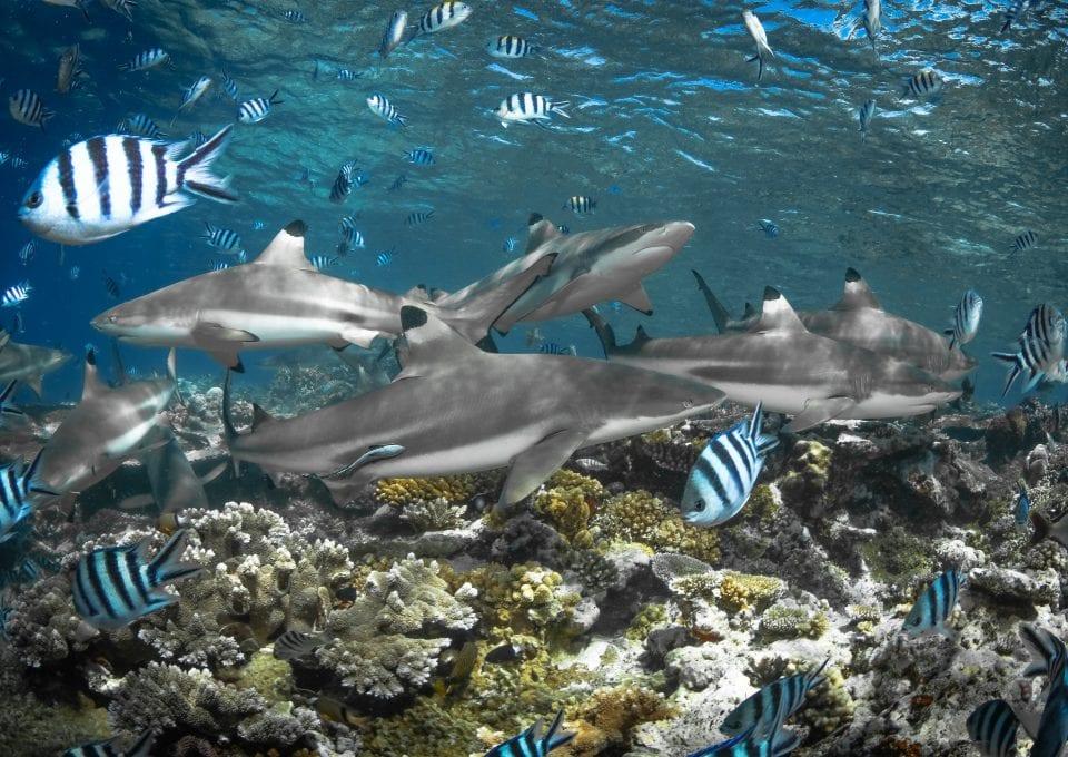 tre packard pangea seed sea walls ocean activism conservation artivism reef sharks
