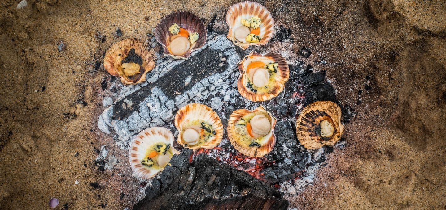 captain sophie hollingsworth adventure cooking sailing scallops