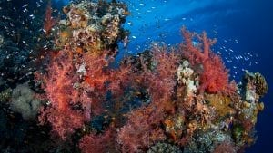Egypt Red Sea Green Fins Coral Reef conservation