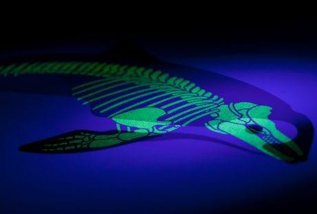 Conservation art endangered animals under the skin vaquita skeleton