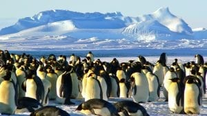 emperor penguins melting sea ice