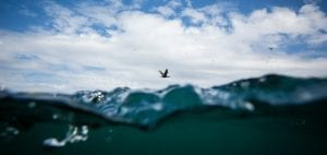 marine protection Greenpeace DEFRA UK fishing fisheries high seas Highly Protected Marine Areas HMPA seabird