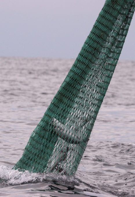 marine protection Greenpeace DEFRA UK fishing fisheries high seas Highly Protected Marine Areas HMPA fishing net