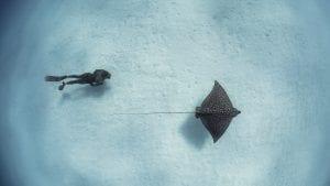 the bahamas andre musgrove underwater photographer ray