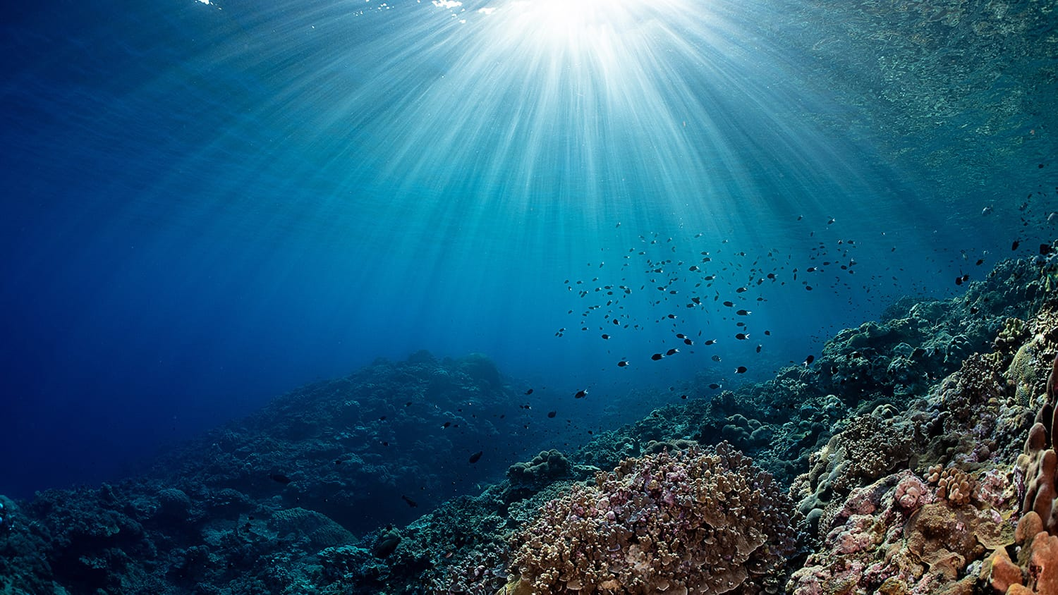 carbon emissions fossil study ocean acidification