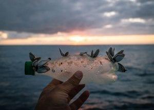 The Vortex Swim Crew marine debris ocean microplastics plastic bottle