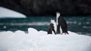 Antarctic marine park bid CCAMLR