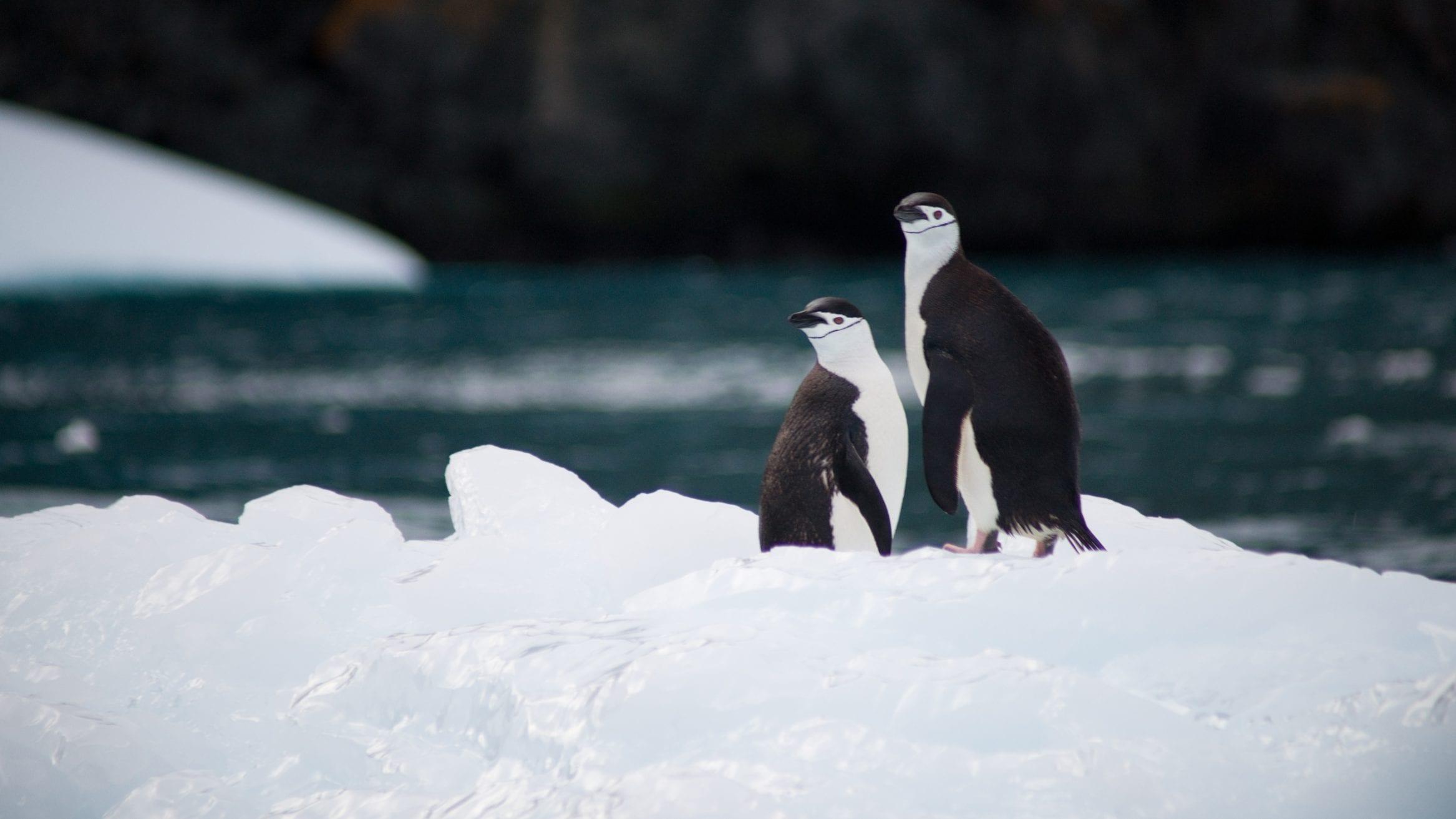 Antarctic marine park bid fails at CCAMLR