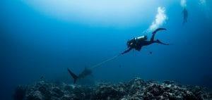 shark finning conservation Randall Arauz costa rica tagging