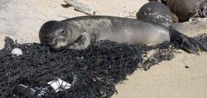 Liz Bonnin Plastic Pollution NOAA