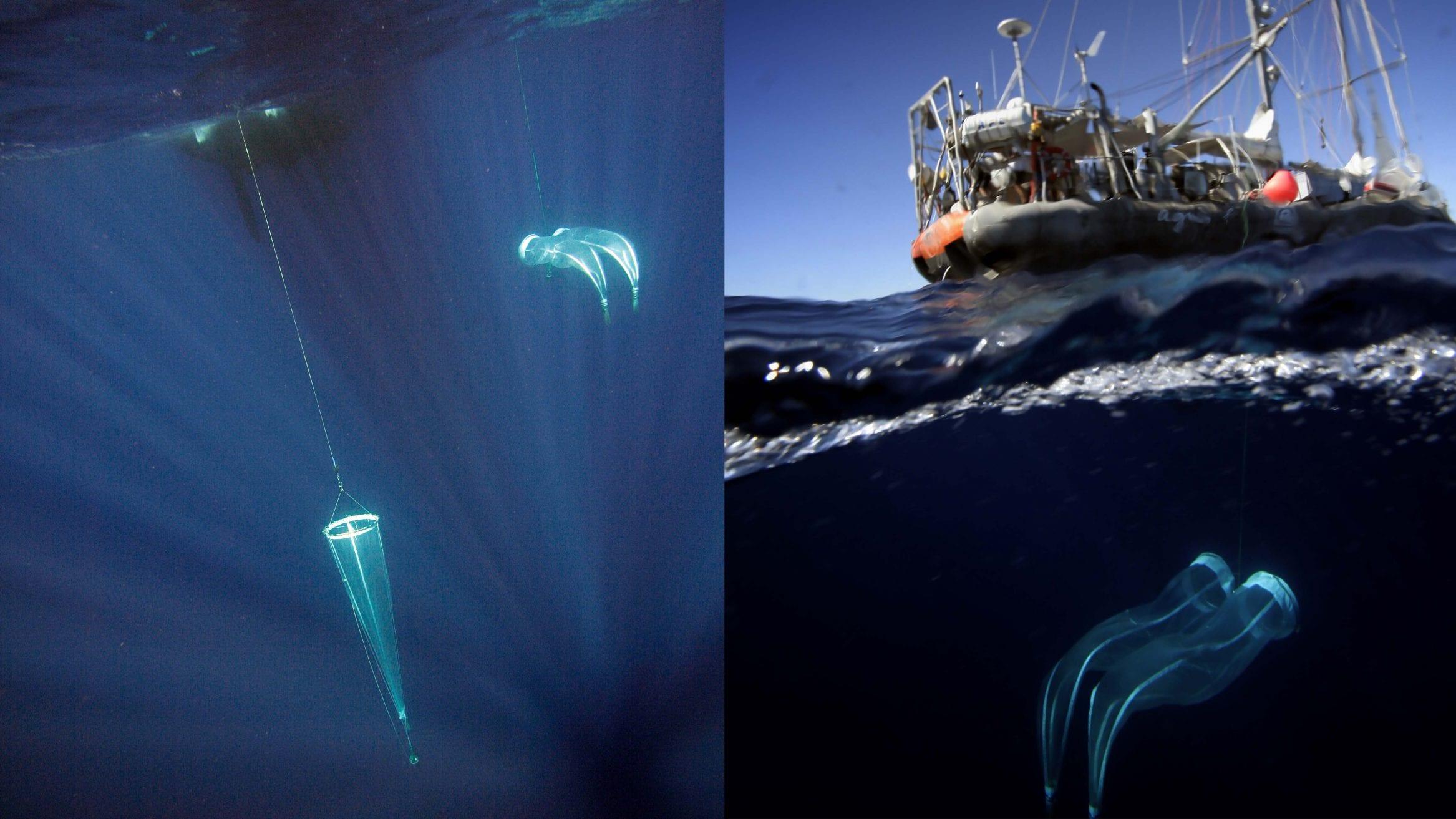 plankton species diversity climate change Tara Ocean
