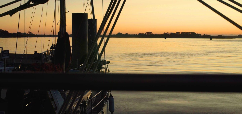 Rara Avis tall ship schooner sailing horizon