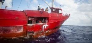 shark finning industry conservation matt brierley illegal shark fin
