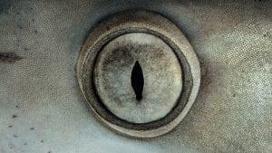 shark finning industry conservation matt brierley hannes klostermann