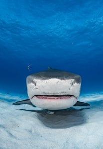 shark finning industry conservation matt brierley