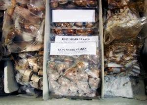shark finning industry conservation matt brierley greenpiece