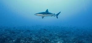 shark finning industry conservation matt brierley rick miskiv