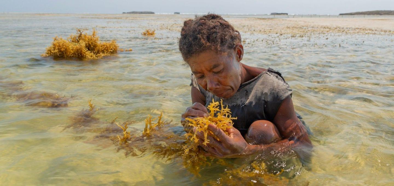 Kokoly Madagascar fisherwomen Garth Cripps Blue Ventures seaweed