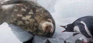 Global Oceans Treaty Greenpeace Ocean seal