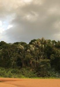 Amazon jungle essequibo river
