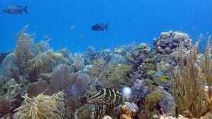 coral reefs microbial diversity