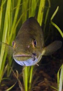 scuba diving canada bass ontario