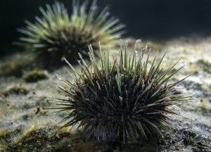 scuba diving canada urchin new bunswick