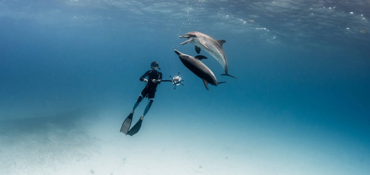 Darewin Project Interpretting Whalesong Fred Buyle dolphins
