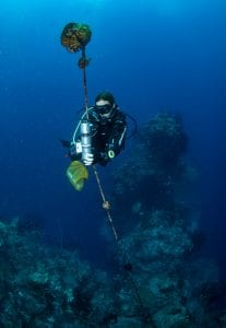 tessa hempson coral reef &beyond