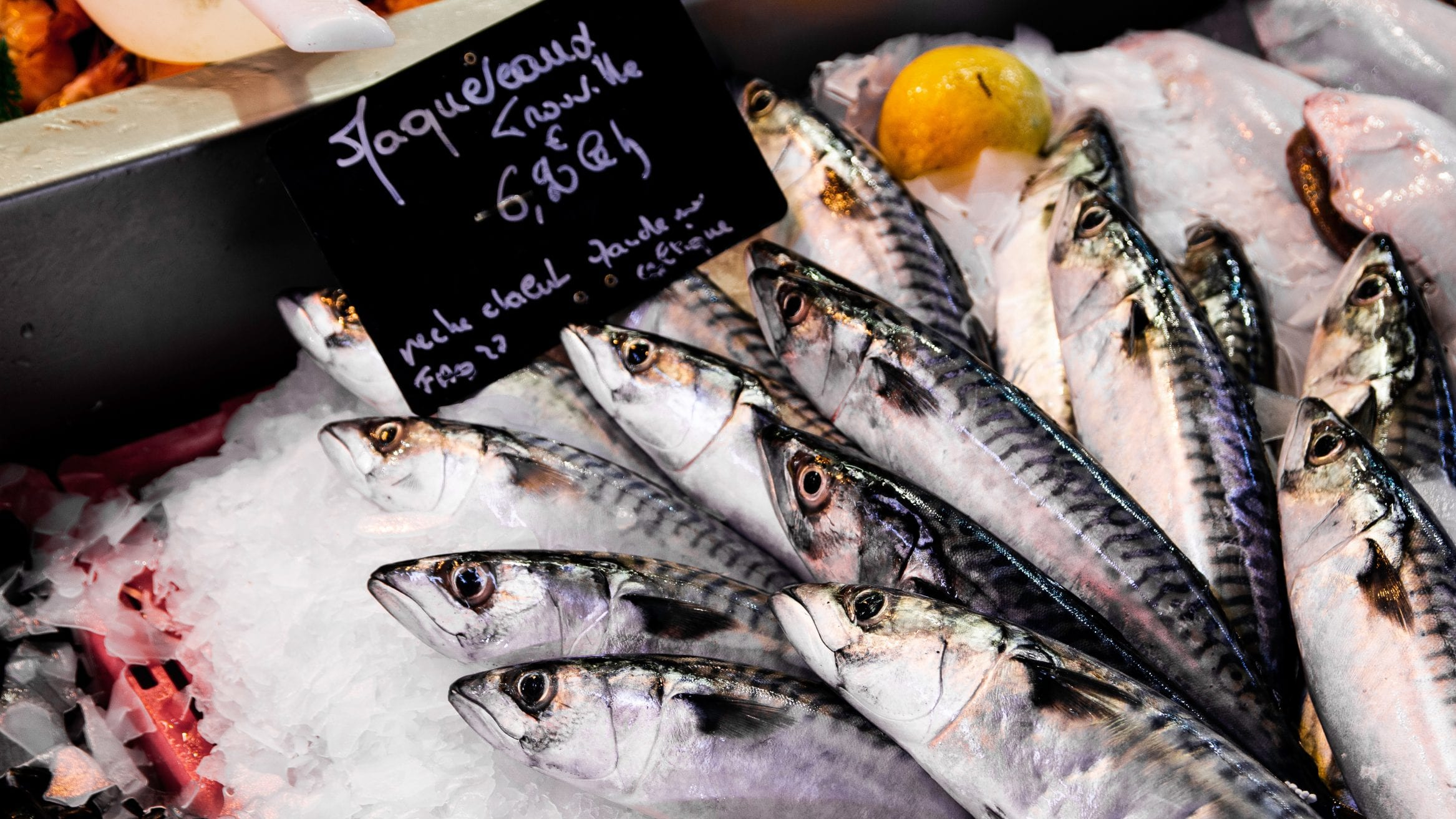 Marine Conservation Society launches campaign to support sustainable seafood in 2020 - Oceanographic