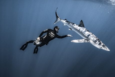 Fred Buyle freediving underwater photography shark