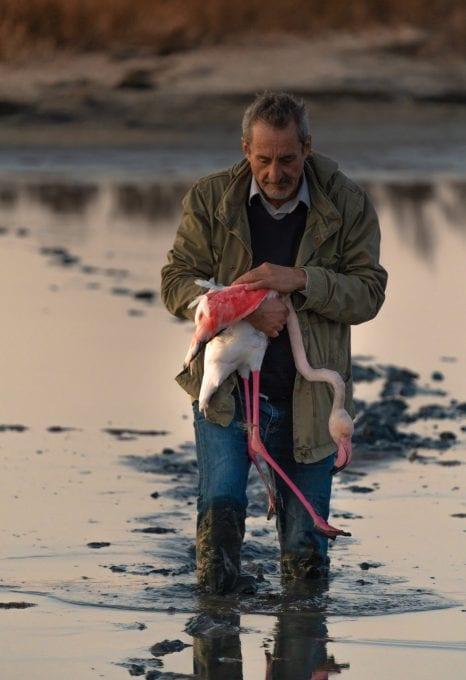 Lefkada Lagoon Flamingos Chris Stavrakas fishing net