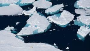 Alastair-Fothergill-Our-Planet-Sophie-Lanfear-polar-bears